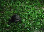 Petugas Kebersihan di Bengkulu Temukan Granat Saat Bersihkan Bak Sampah