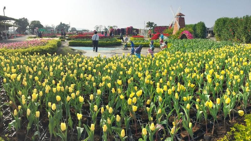 Chung She Flower Garden ada di Distrik Houli, Taichung, Taiwan (Kurnia/detikcom)