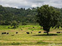 Taman Nasional di Alas Purwo.