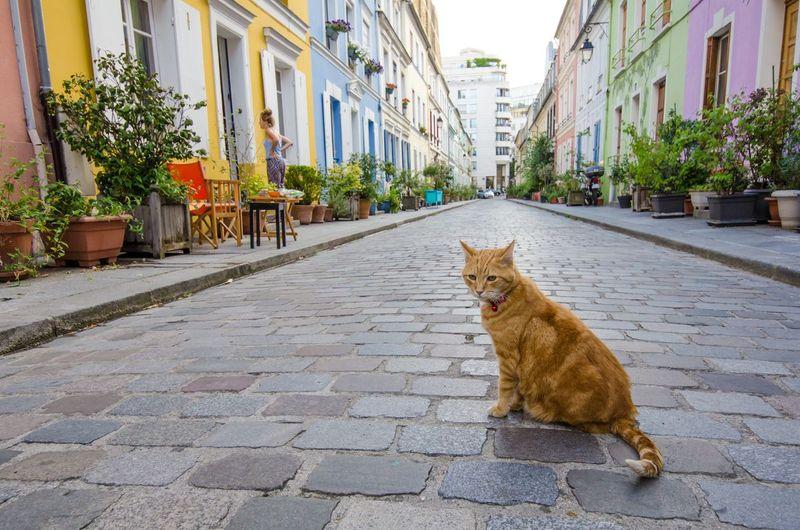 Inilah Rue Cremieux di Paris, sebuah gang pemukiman penduduk yang punya desain cantik nan instagrammable (iStock)