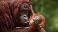 Hari Bumi, KLHK Serukan Imbauan Jaga Lingkungan dan Spesies