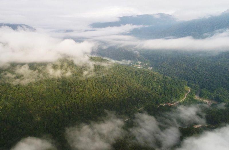 Hutan konservasi yang luas menyambut wisatawan di Kabupaten Tambrauw, Papua Barat. Melihat cendrawasih di tanah aslinya adalah hal yang tak boleh dilewatkan. (dok Kementerian Pariwisata)