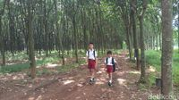 Hutan Romantis Ala Presiden Jokowi-Iriana, Tapi di Semarang