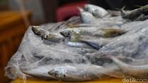 Korea Ngebet Beli Ikan Layur dan Cumi RI