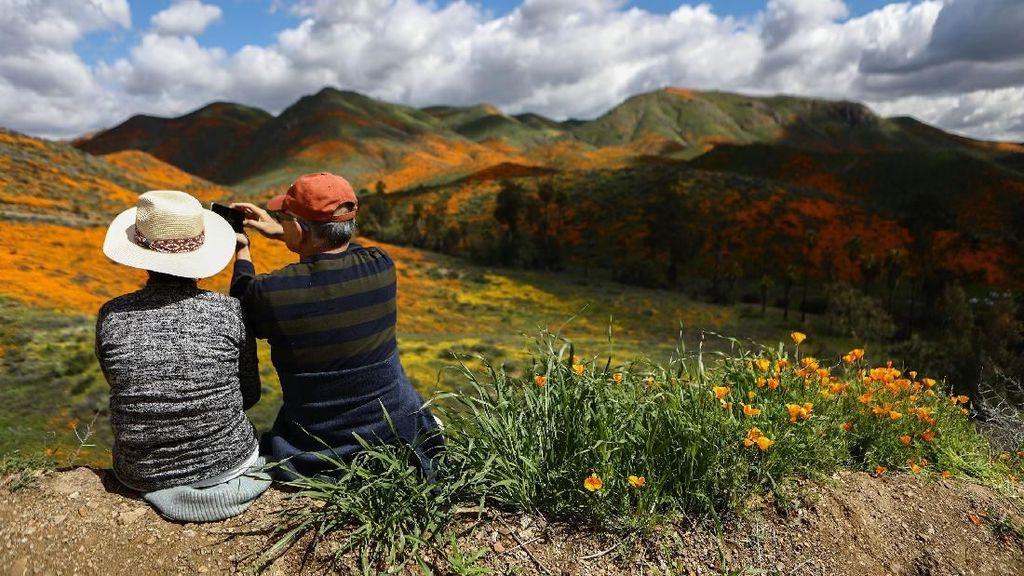 Potret Langka Bunga Warna-Warni Mekar di Gurun California