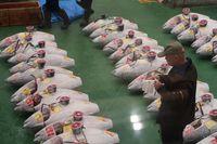 Fakta Menarik Soal Pasar Ikan Toyosu atau Pasar Tsukiji Baru