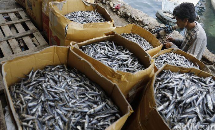 Seorang pengepul ikan asin mencatat pemasukan ikan asin yang sudah di timbang.