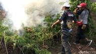 Momen Polisi Bakar 10 Hektare Ladang Ganja di Aceh