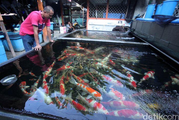 Pasar ini menjual berbagai macam ikan hias dengan beragam harga.