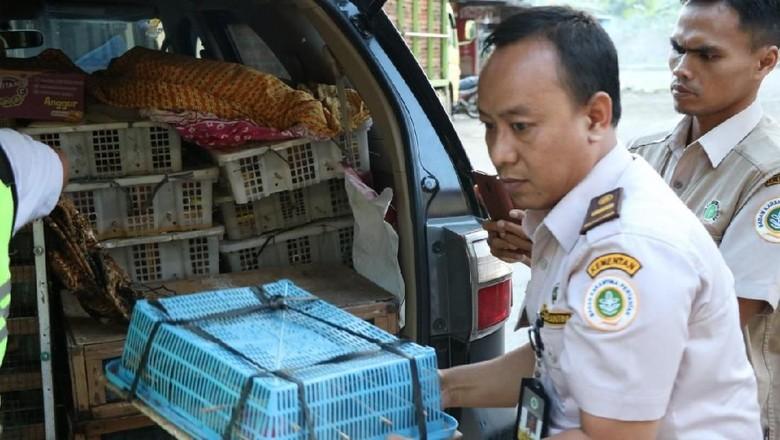 Penyelundupan 570 Ekor Burung Asal Siak Digagalkan di Cilegon