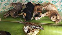 Gemasnya! Begini Jadinya Kalau Kucing Petani Berpose Dengan Makanan