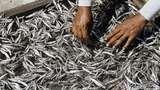Susi Disindir Soal Impor Ikan Asin, Ini Fakta dari BPS