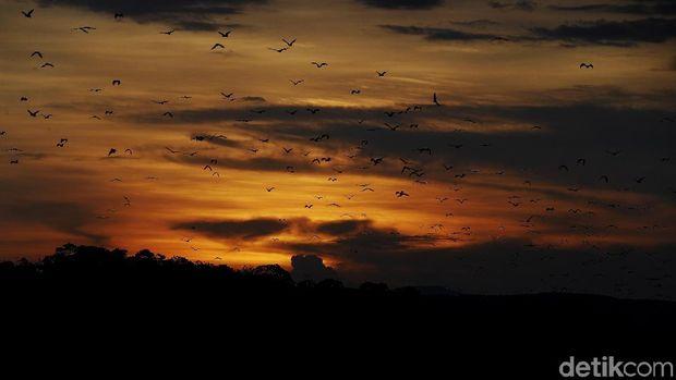 Pulau Kalong NTT yang Cocok Untuk Pemburu Senja