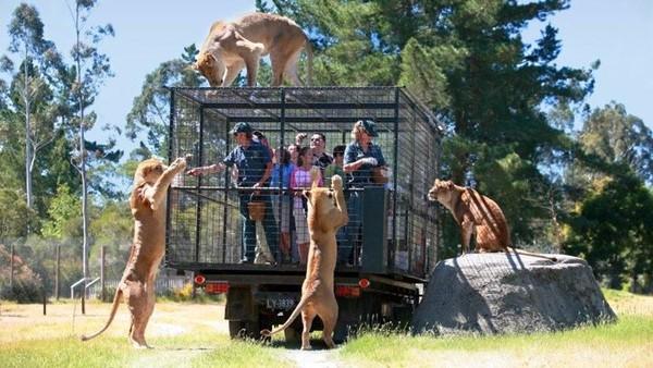 Bagi traveler yang ingin merasakan suasana bertemu fauna di habitatnya langsung, maka Orana Wildlife Park wajib kamu kunjungi. Di sana kamu dapat berinteraksi langsung dengan hewan liar (New Zealand)