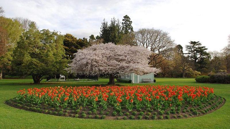 Soal alam hijau, Christchurch memiliki Botanic Gardens yang juga disenangi wisatawan. Indah sekali bukan? (gardenstovisit.nz)