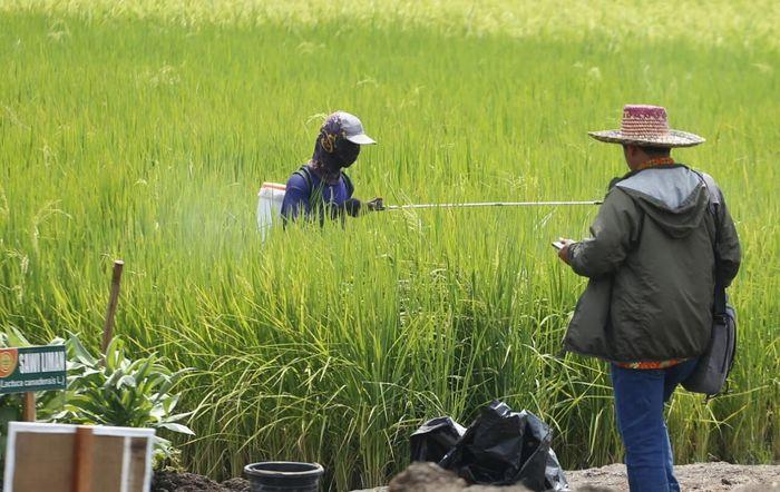 Bantuan Di Sektor Pertanian Bagaimana Dampaknya Buat Petani