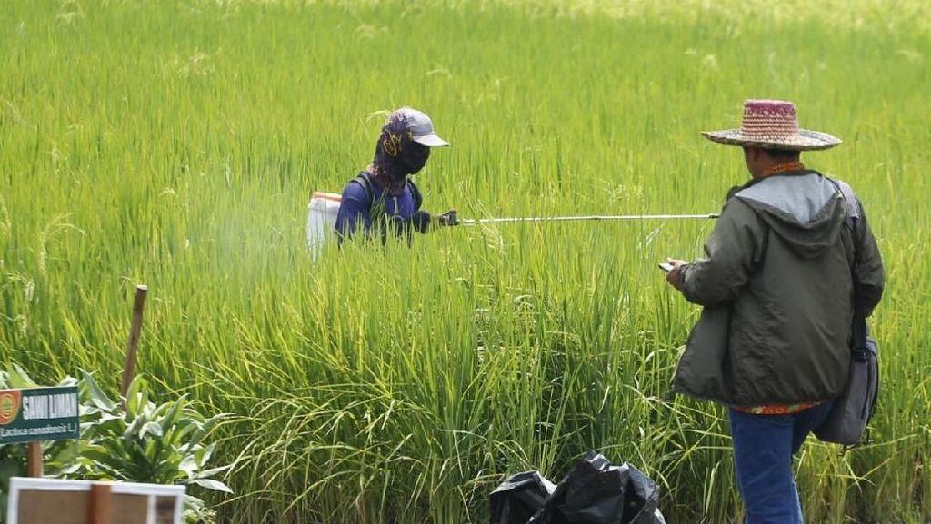Bantuan di Sektor Pertanian, Bagaimana Dampaknya buat Petani?