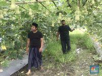Kisah Petani di Pinggir Bandara Soetta Beromzet Jutaan Rupiah