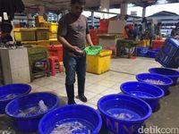 Serunya Berwisata ke Pasar Tsukiji Versi Indonesia di Muara Baru