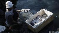 Bertambahnya warga yang menggeluti usaha ikan asin membuat kebutuhan lahan di Pulau Messah semakin bertambah.