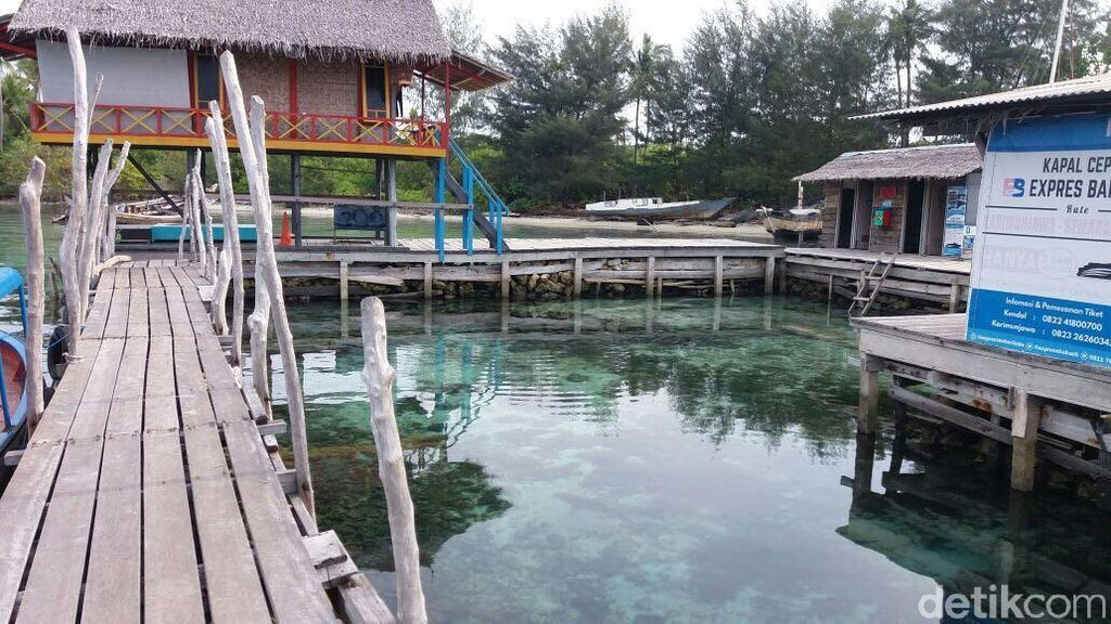 Taman Nasional Karimunjawa Pernah Perintahkan Setop Wisata Hiu