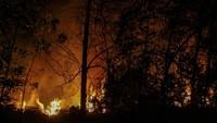 Api membakar semak belukar dan pepohonan pada kebakaran lahan di Pekanbaru, Riau, Senin (18/3/2019) malam. ANTARA FOTO/Rony Muharrman.