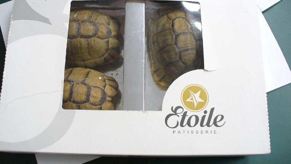 Pria Ini Selundupkan Kura-kura Langka yang Hidup Sebagai Kue