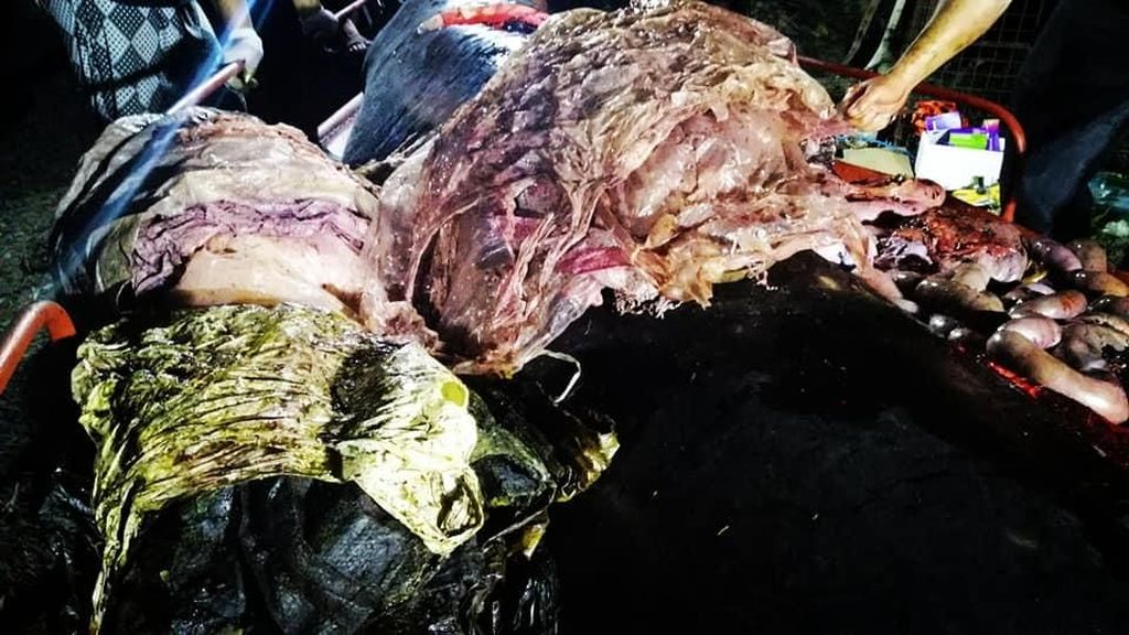 Kebangetan! Ini Penampakan 40 Kg Plastik dalam Perut Paus di Filipina