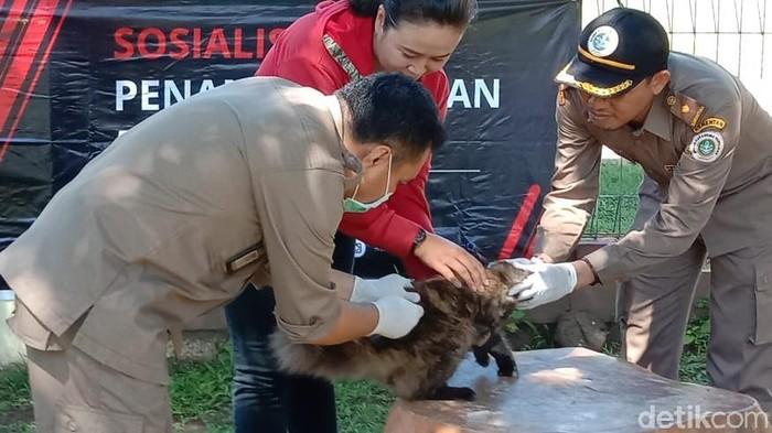 Vaksinasi hewan pembawa rabies di Sumbawa, NTB. (Harianto/detikcom)