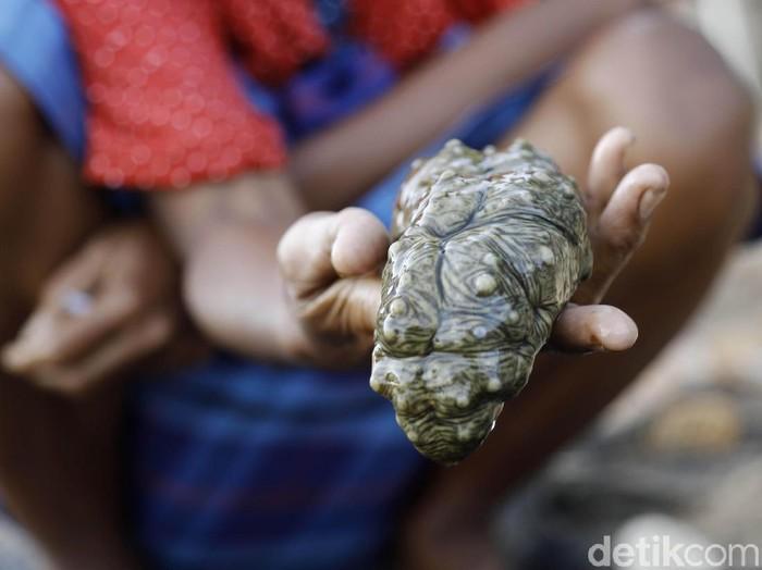 Biota laut, bernama Teripang jadi buruan nelayan di Pulau Papagarang, NTT. Hewan tak bertulang belakang ini telah menembus pasar China dengan harga hingga Rp 3 Juta/kg.