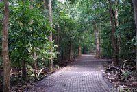 Keajaiban Hutan Tangkoko di Bitung