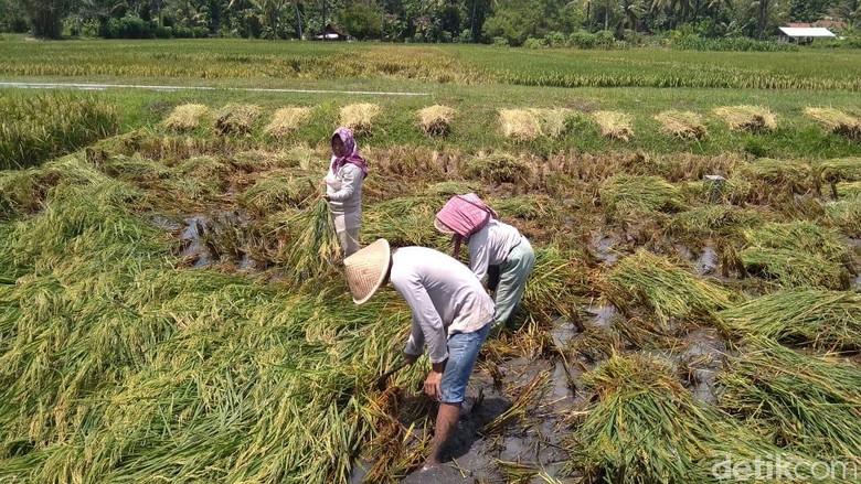 Kompleksitas Tenaga Kerja Pertanian