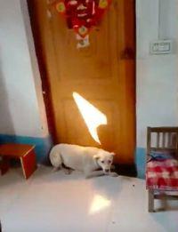 Anjing ini tak rela pemiliknya menikah dan memblokir pintu