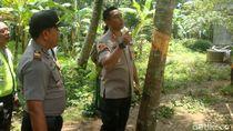 Selidiki Masjid Diacak-acak di Banyumas, Polisi Amankan Batu dan Pohon