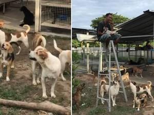 Makanannya Selalu Dicuri Anjing, Pria Ini Makan di Atas Tangga
