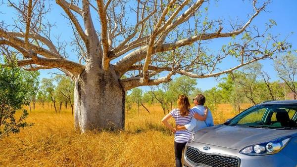 Kalau kamu petualang sejati, lanjutkan perjalanan road trip kamu sampai ke ujung utara Australia Barat. Kamu bisa melihat pohon Baobab di East Kimberley (Tourism Western Australia)