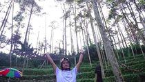Dikelilingi Pinus, Rumah Dodit Mulyanto Ada di Tengah Hutan