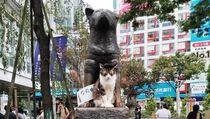 Kucing Juga Ngefans Patung Hachiko