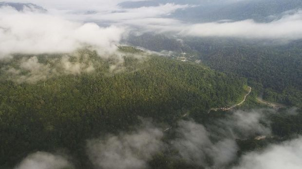 Berjalan Vertikal Demi Bersua 'Burung Surga' di Papua