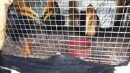 Penyelundupan 40 Satwa Langka Digagalkan, 5 Pelaku Diperiksa Gakkum KLHK