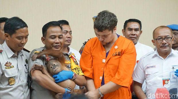 WN Rusia Zhetkov Andrei ditetapkan menjadi tersangka kasus penyelundupan orang utan