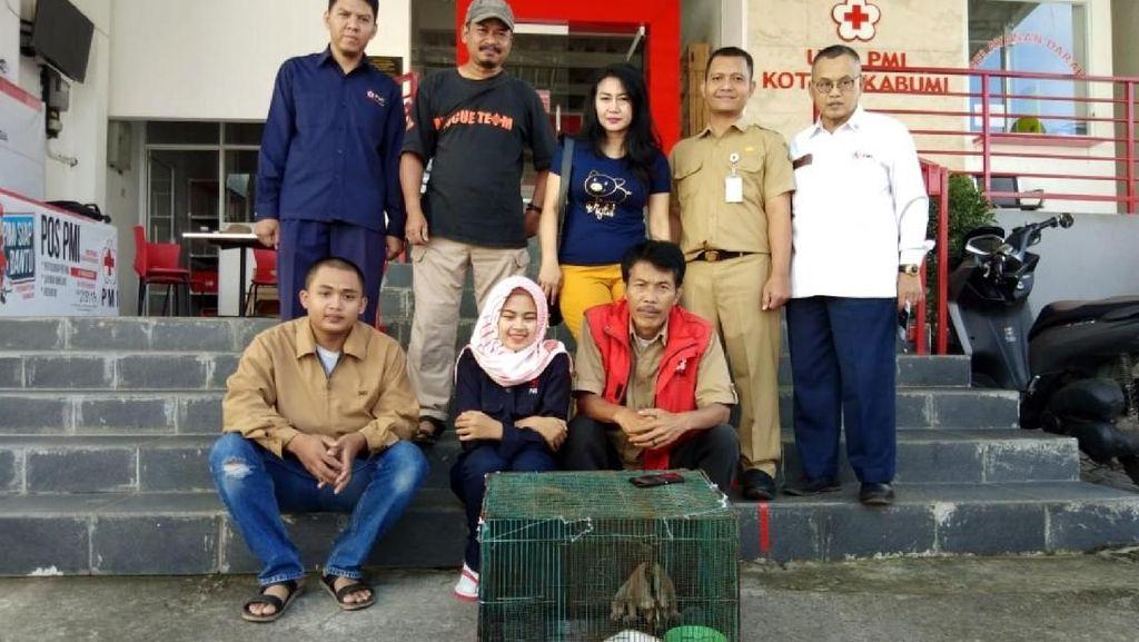 Jatuh dari Pohon, 2 Kukang Diserahkan Pelajar ke PMI Sukabumi