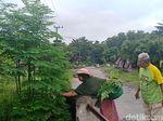 Wow... Tiga Bulan, Ekspor Daun Kelor ke Korea Selatan Capai 13 Kali