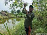 Petani di Sidoarjo Semangat Rawat Ratusan Pohon Kelor Agar Bisa Ekspor