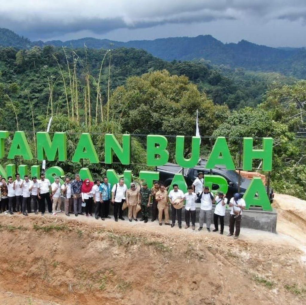 Antam Kembangkan 4 Varian Buah Asli Indonesia di Bogor