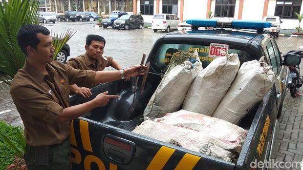 Barang bukti 200 kg kayu manis