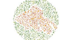 Tes buta warna biasanya menggunakan angka, nah supaya tidak membosankan tes alternatif ini mengharuskan kamu menebak siluet hewan. Perhatikan petunjuknya.