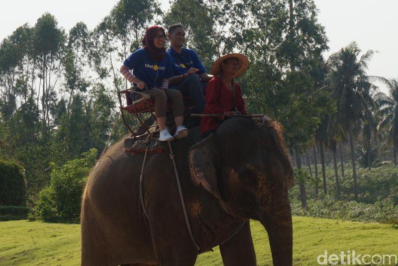 Traveler bisa menemukan sejumlah atraksi di sini. Mulai dari naik gajah dan berjalan-jalan di sekitar Suanthai (Shinta/detikcom)
