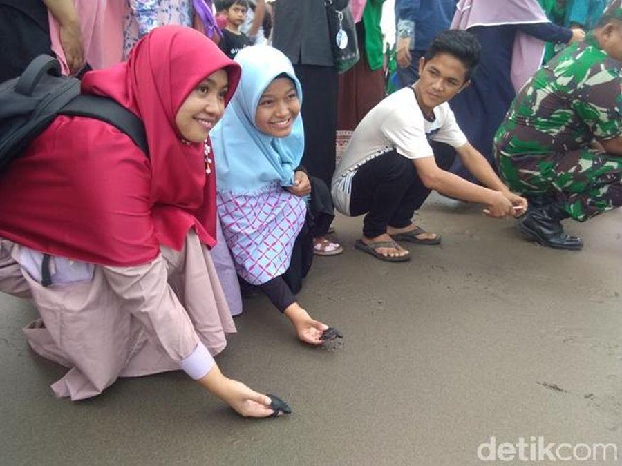 Aksi ini dilakukan mahasiswa prodi Ilmu Kelautan dan Akuakultur Fakultas Pertanian Unimal untuk menyelamatkan penyu ke Laut Bangka, Krueng Geukuh, Aceh Utara (Datok Haris Molana/detikcom)