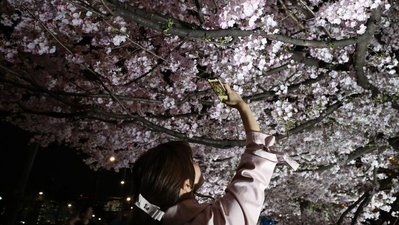 TOKYO, JAPAN - MARCH 27: A man takes a photograph with his smartphone of blooming cherry blossom trees at the National Theatre of Japan on March 27, 2019 in Tokyo, Japan. The blossom is deeply symbolic in Japan, it only lasts for around one week and marks the beginning of spring. It is claimed that the short-lived existence of the blossom taps into a long-held appreciation of the beauty of the fleeting nature of life, as echoed across the nations cultural heritage.  (Photo by Takashi Aoyama/Getty Images)